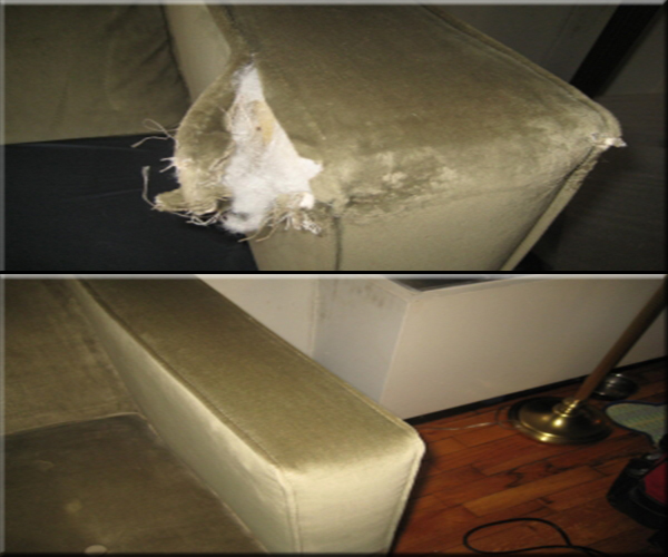 couch-protection